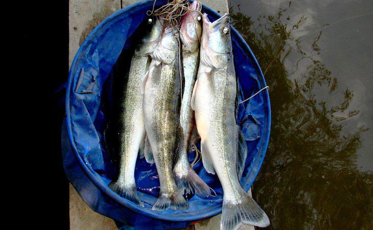 места для рыбалки на свияге
