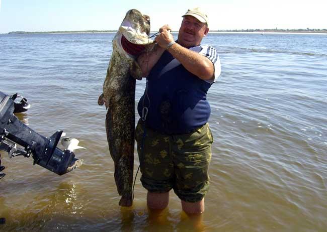 летняя рыбалка на нижней волге