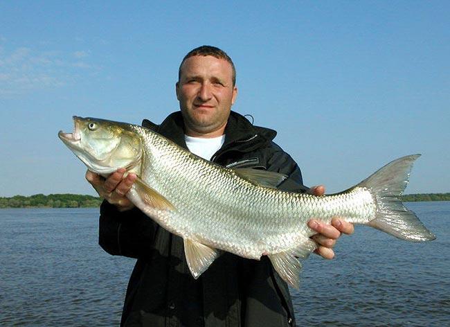 на что ловить рыбу в угличе