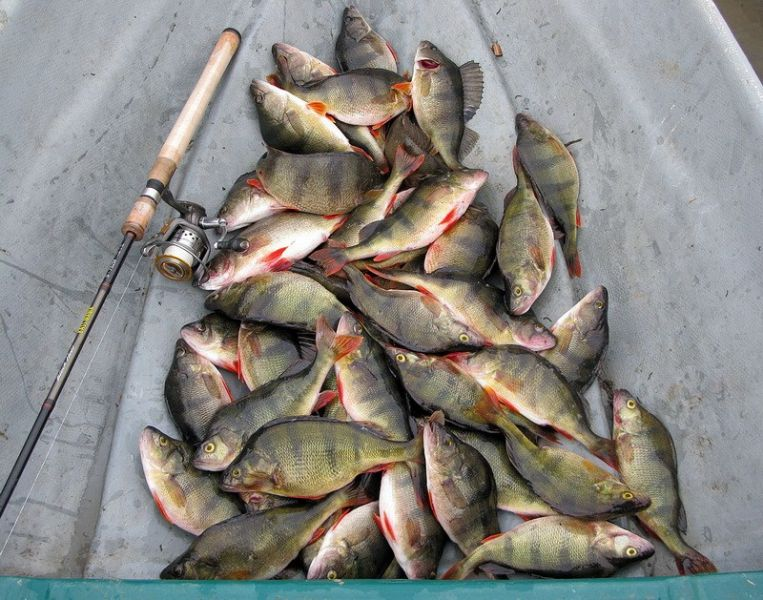 красивые улов рыбалки