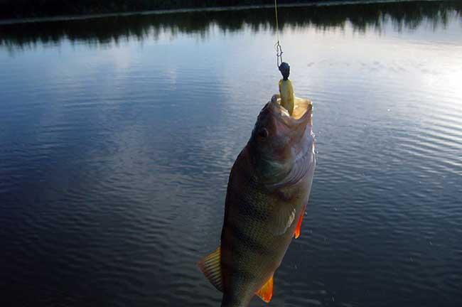 рыболовно охотничья база капитан
