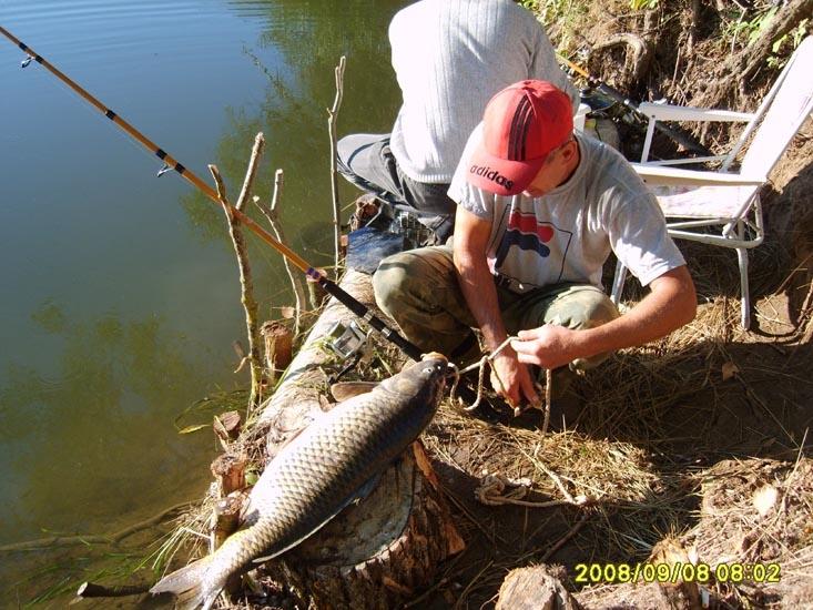 тихие пруды рыбалка
