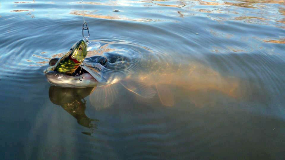 захватывающая рыбалка