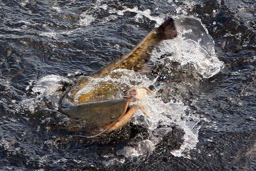 рыбалка в поныровском районе