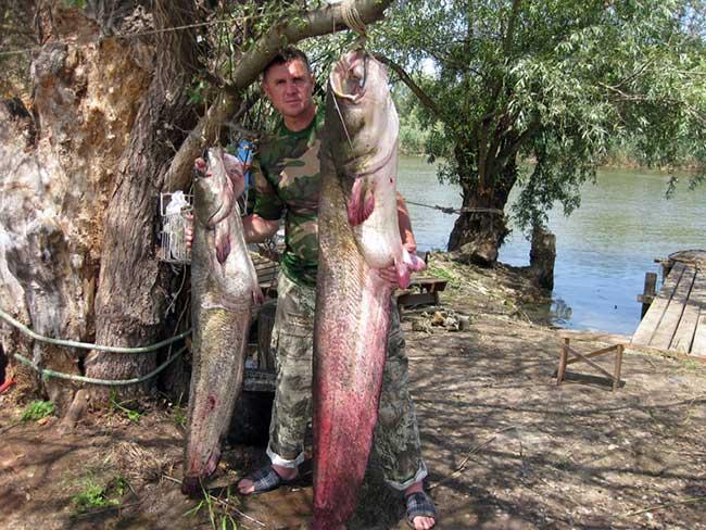 рыбалка на цимлянском летом